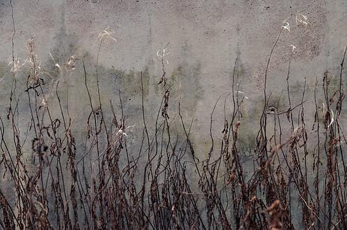 street plant wall suomi finland leaf helsinki dry surface helsingfors skrubu pni manandenvironment pekkanikrus