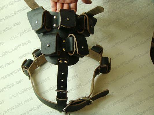 Weighted Dog Collar Pitbull