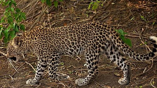 africa travel tourism nature outdoors published afrika 2011 dane2