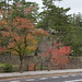 松江城は森の中