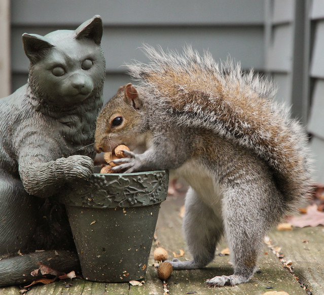 The Greedy Squirrel