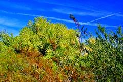 Green trees breed fees