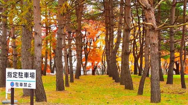 林の間からは季節