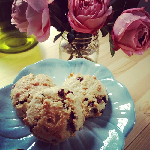 Gluten free/grain free cookie recipe in the works by elletrain