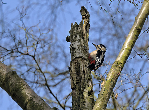 Woody High Above  by Andy Pritchard - Barrowford