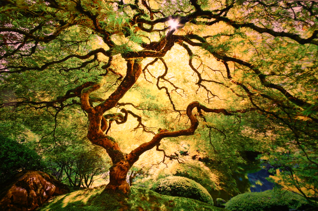 Japanese Maple by Peter Lik