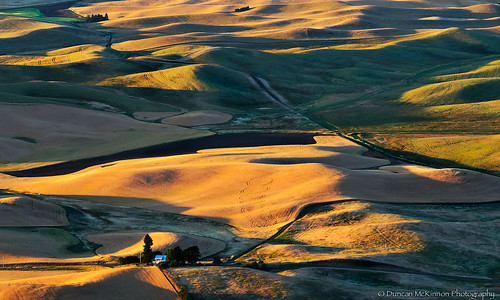 Patterns Of Palouse
