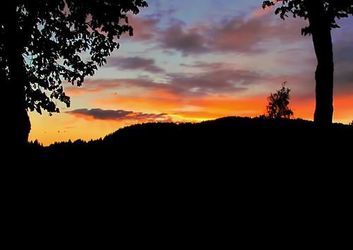summer sky orange bird nature colors weather birds norway night clouds evening norge flying outdoor sommer natur himmel fugl skyer fugler kongsvingerfestning kveld kongsvinger oransje farger canonsx30is
