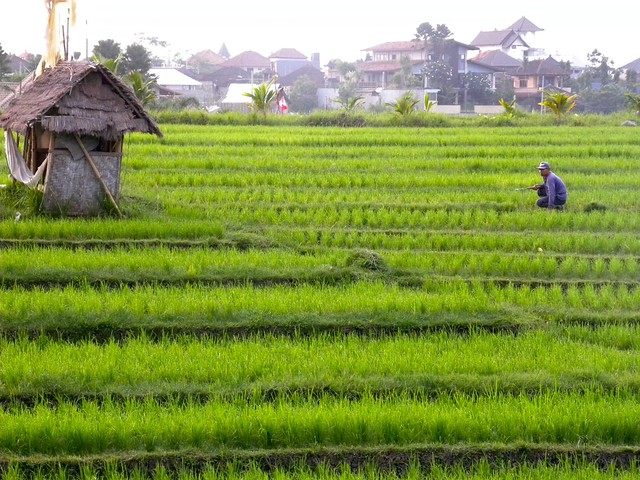 We were up super early, but the rice paddy workers had already been up for quite a while.