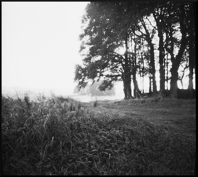 Zero Image Pinhole Ilford Panf Wilts Trees 2