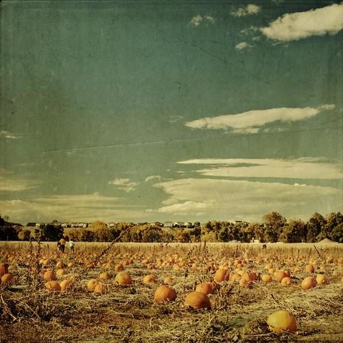 autumn sky fall clouds rural canon vintage square colorado farm pumpkins aged textured pumkin pumkinpatch denverbotanicgardensfarm texturesquared pumkinfield t1i