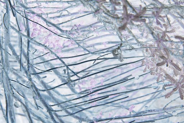 Jae Hi Ahn, Brooklyn Botanic Garden (Purple Series #1, ed. 1/10), 2011, C-print, 28 x 45 inches