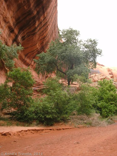 Cloudy mouth of Neon Canyon, Grand Staircase-Escalante National Monument, Utah