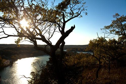 lake tree lakeoftheozarks ozarks hahatonka camdenton
