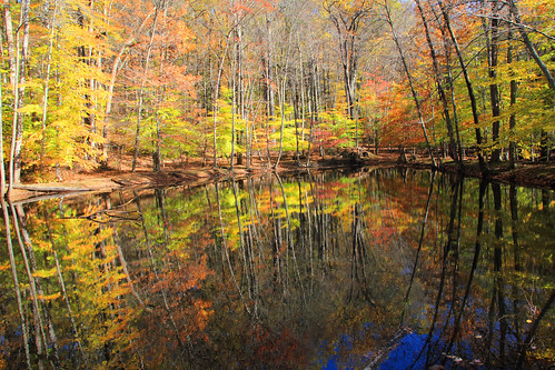 autumn nature foliage jockeyhollow morriscounty