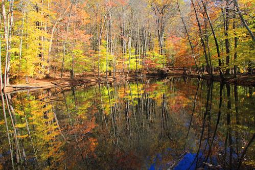 autumn nature foliage jockeyhollow morriscounty