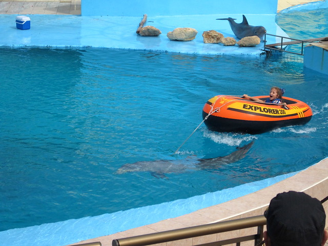 riding with a dolphin at national aquarium in havana cuba