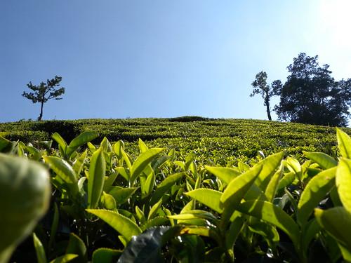 uk sunset sky india green church pool leaves photography still nikon dubai estate tea hills ooty teaplantation southindia nilgiris teaestate daruwala glenmorgan p6000 yohaan ootyclub