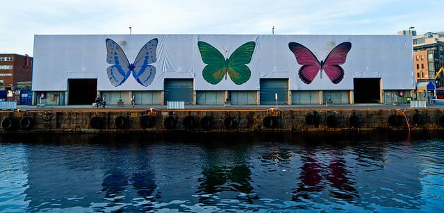 butterflies at aker brygge