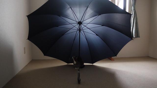 傘の下の猫
