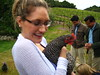 Chicken at Napa winery