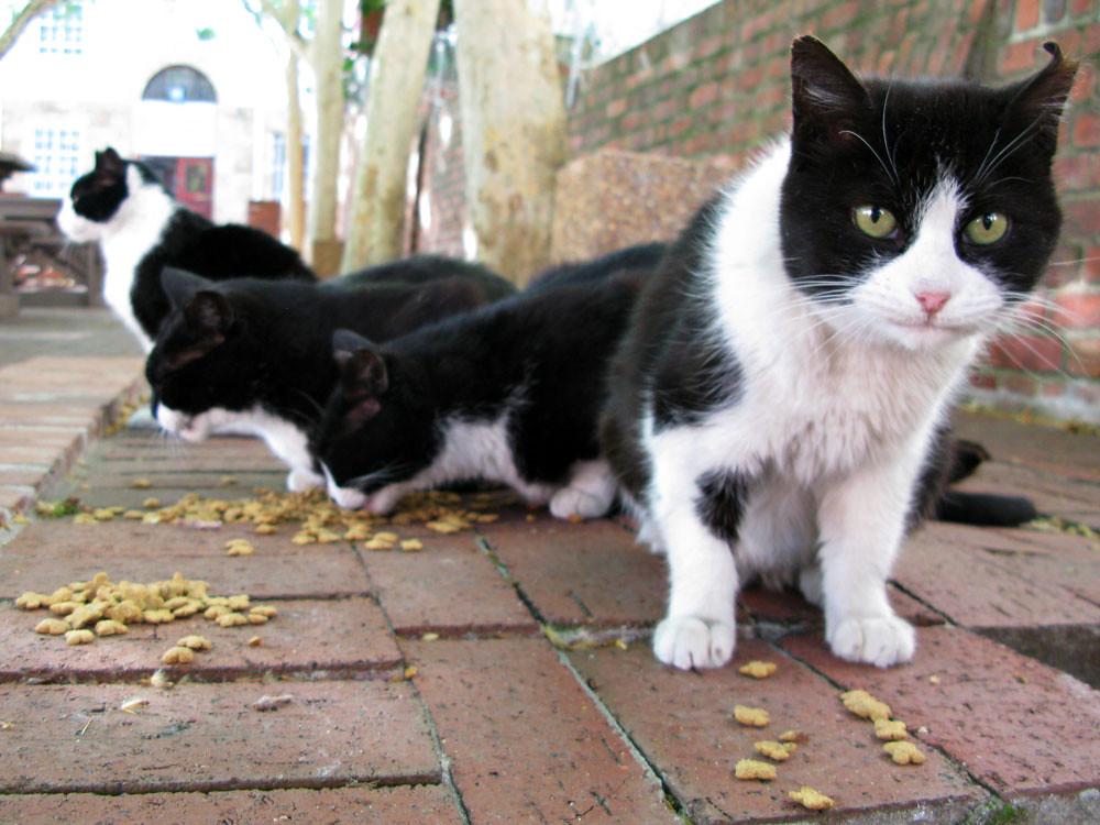 Long Kloof Cats