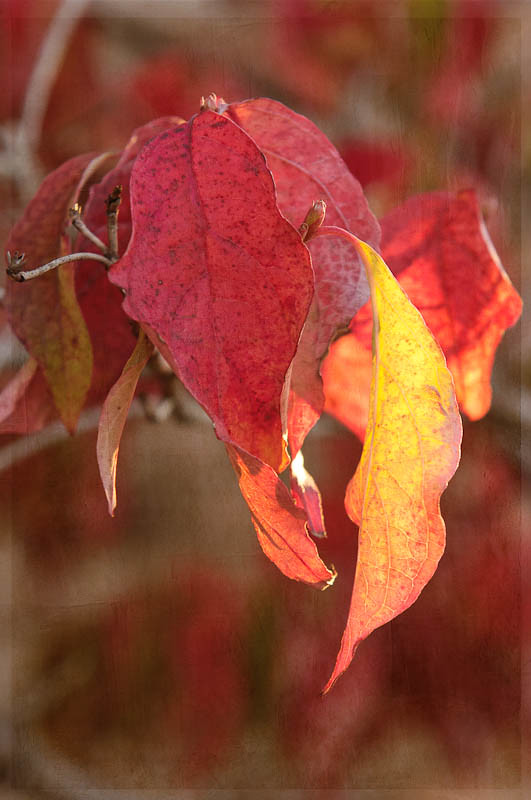 Soft Crimson Rain