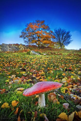 Autumn ontop Beacon Hill