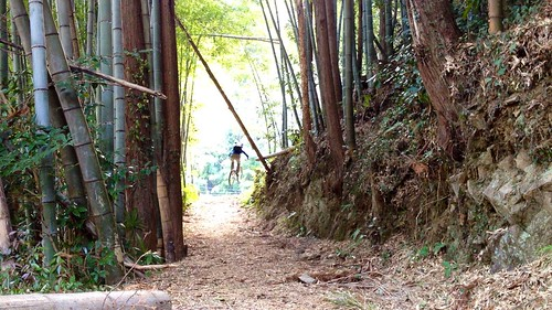 Warping through the bamboo tunnel