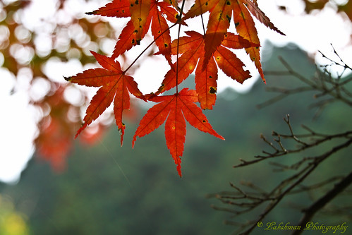 Autumn in Gifu