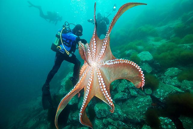 Japan diving