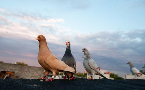Birds in a line: Bushwick Brooklyn