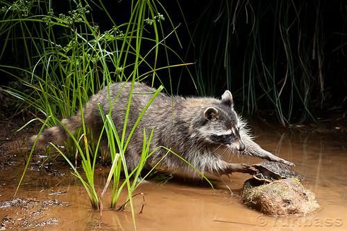 Primer Premio Fotografía de Fauna O.N.