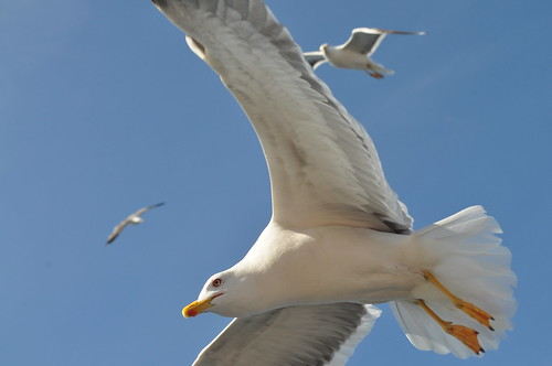 Attack of the sea gulls!