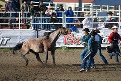 animal sports, rodeo, western riding, mare, event, equestrian sport, sports, pack animal, reining, horse harness,