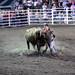 Sarpy Fair Rodeo 491
