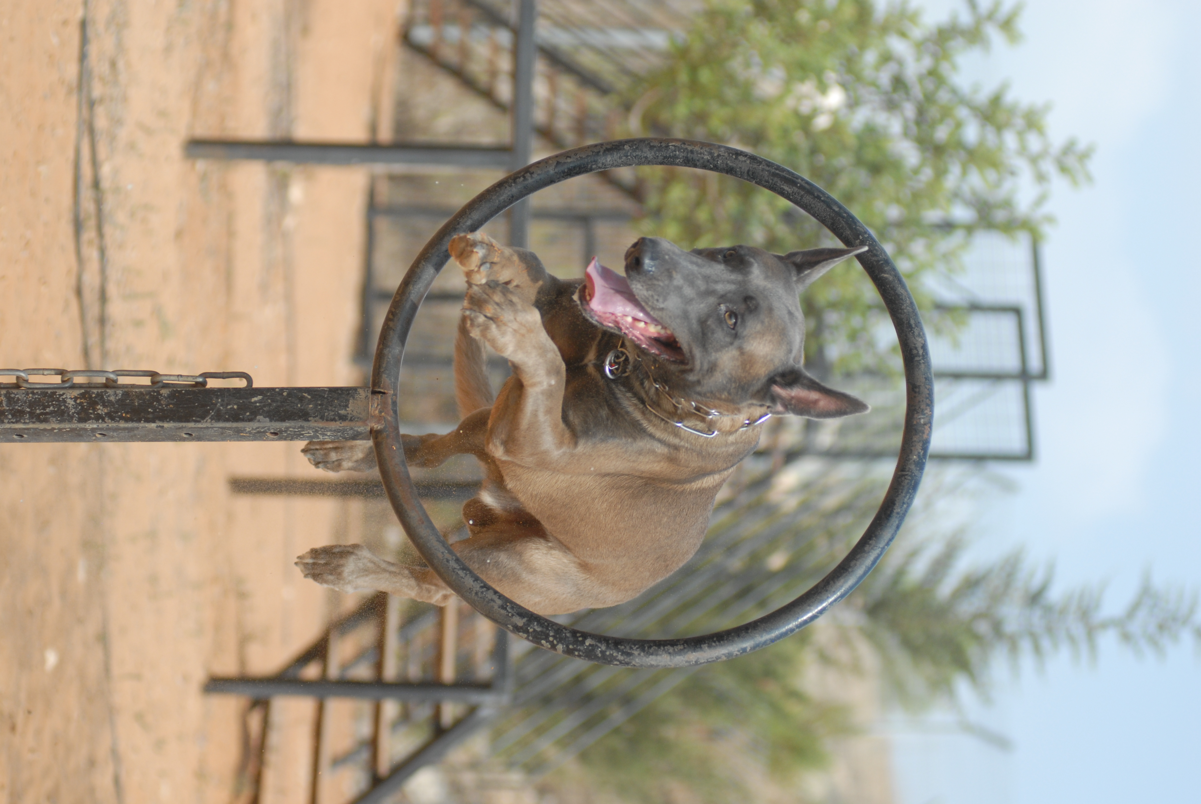 Image Result For Dog Training Brandon