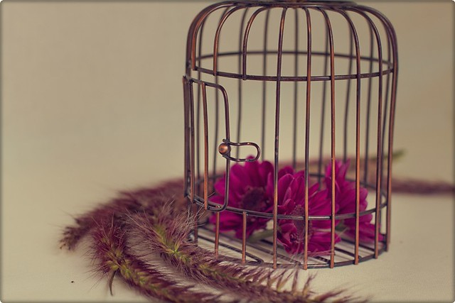 A cage...