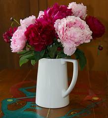 a jug of peonies