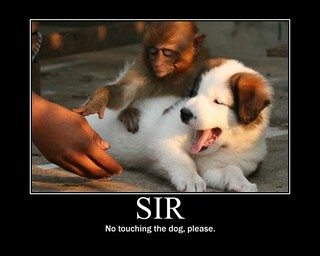 funny-pictures-no-touching-the-dog-please-i-has-a-funny