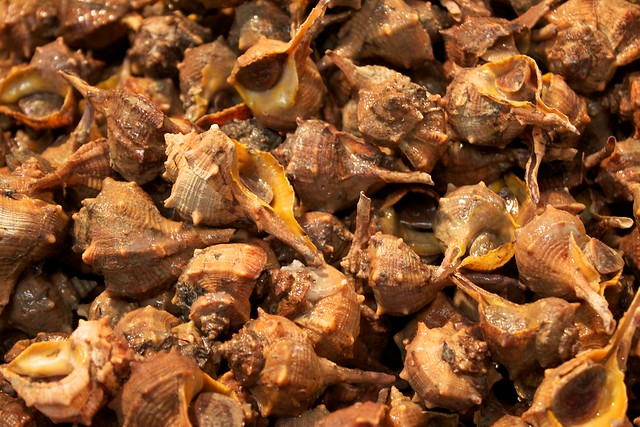 Types Of Edible Sea Snails – Billy Knight
