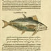 L'histoire naturelle des estranges poissons marins