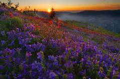 Sundown on Johnston Ridge, Mt St Helens