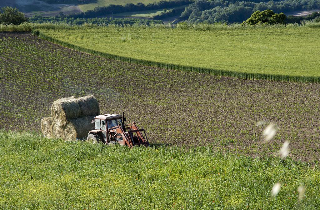 Agricoltura - Author: pasqualefiorillo / photo on flickr