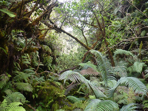 The forest of the windward side of Haleakalā.