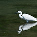 Small photo of aigrette