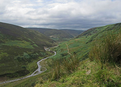 Bowland Forest