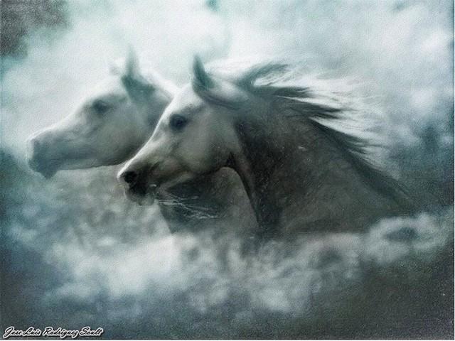 Caballos Arabes Entre La Niebla