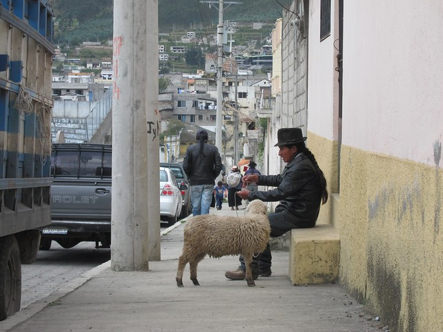 Ecuadorean Man with Sheep