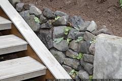 rachel's rock wall in the back yard
